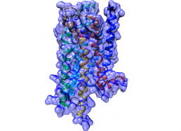 G protein-coupled receptor (GPCR) – cell surface membrane protein